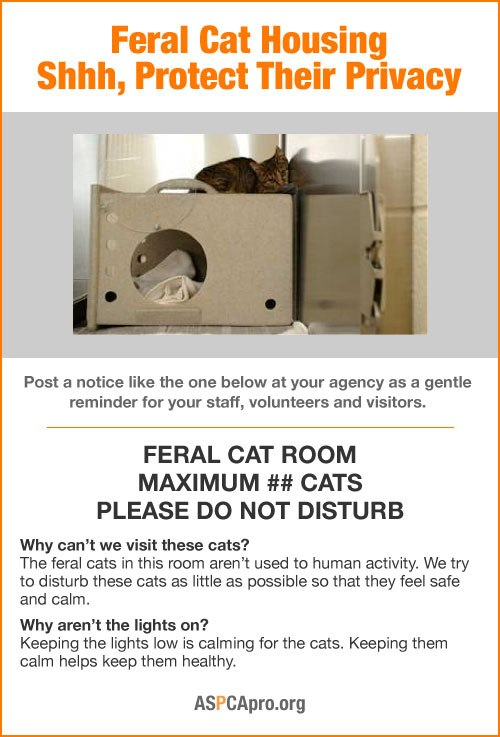 IndyFeral Barn Cat Program IndyFeral Barn Cat Program (Flyer - pdf ...