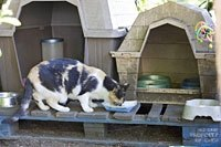 an unused doghouse makes a good feeding station