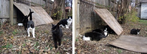 a piece of plywood leaning against a wall provides a sheltered feeding area for cats