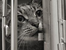 shelter cat in cage