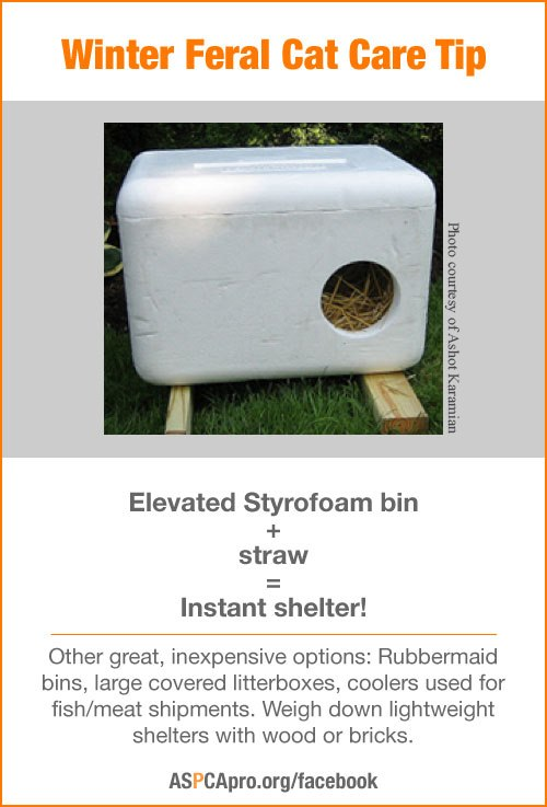Read our Outdoor Shelter and Feeding Station Idea Sheet